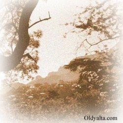 Старый Таврический лес