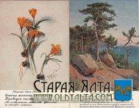 Флора Южного берега Крыма. Старинная открытка